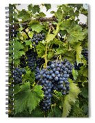 Harvest Divine Spiral Notebook