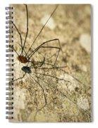 Harvestman Spider Spiral Notebook
