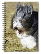 Having A Bad Hair Day Spiral Notebook