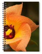 Hawaiian Hau Spiral Notebook