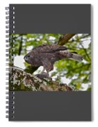 Hawaiian Hawk With Mouse Spiral Notebook
