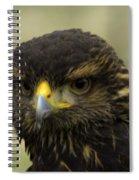 Hawk 1 Spiral Notebook