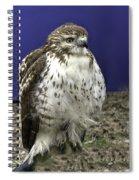 Hawk 3 Spiral Notebook