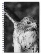 Hawk Attack Black And White Spiral Notebook