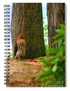 Hawk Eyes Spiral Notebook