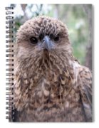 Brown Hawk Face Profile Spiral Notebook