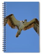 Hawk In Flight Spiral Notebook