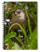 Hawk In The Grass Spiral Notebook