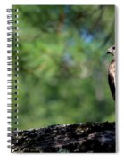 Hawk In Tree Spiral Notebook
