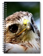 Hawk - Raptor - Living The Good Life Spiral Notebook