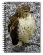 Hawk V3c Spiral Notebook