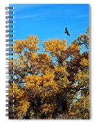 Hawks Afar Spiral Notebook