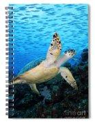 Hawksbill On Eldorado Spiral Notebook