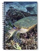 Hawksbill Sea Turtle Spiral Notebook