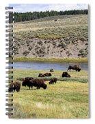 Hayden Valley Bison Herd In Yellowstone National Park Spiral Notebook