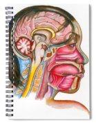 Head And Neck Anatomy Spiral Notebook
