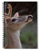 Head High Spiral Notebook