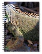 Head Light Spiral Notebook