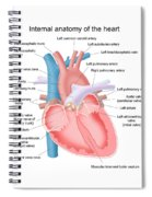 Heart Anatomy Spiral Notebook