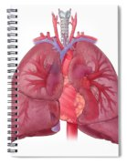 Heart Illustration, With Pulmonary Veins Spiral Notebook