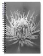 Heart Of A Red Clematis In Black And White Spiral Notebook