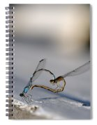 Heart Of The Damselfly Spiral Notebook