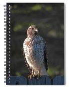 Heartful Hawk Spiral Notebook