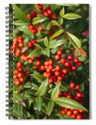 Heavenly Bamboo Red Berries Spiral Notebook