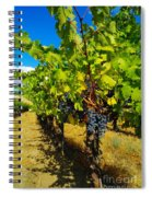 Heavy On The Vine At The High Tower Winery  Spiral Notebook