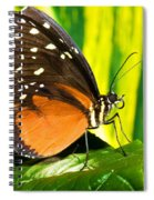 Hecale Longwing Butterfly Spiral Notebook