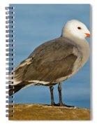 Heermanns Gull On Rock Spiral Notebook