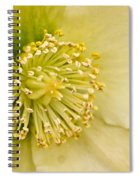 Heleborus 2 Spiral Notebook