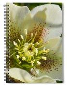 Helleborus Bright Spiral Notebook