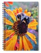 Helenium Bumble Bee Spiral Notebook