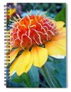 Helenium Flowers 2 Spiral Notebook