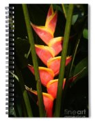 heliconia from Costa Rica 8 Spiral Notebook