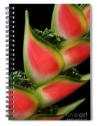 Heliconia Wagneriana - Giant Lobster Claw Heliconiaceae - Maui Hawaii Spiral Notebook