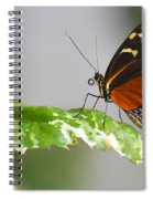 Heliconius Butterfly On Green Leaf Spiral Notebook