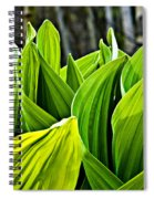 Hellebore And Aspens Spiral Notebook