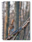 Hen Ruffed Grouse On Roost Spiral Notebook