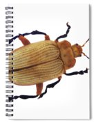 Henry Lin Beetle Spiral Notebook
