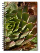 Hens And Chicks Sedum 1 Spiral Notebook