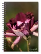 Her Beauty Of Age Spiral Notebook
