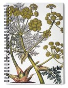 Herbal: Fennel, 1819 Spiral Notebook