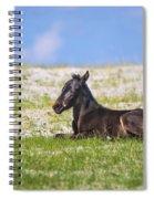 Herd 41 Spiral Notebook