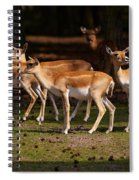 Herd Of Blackbuck Antilopes In A Dark Forest Spiral Notebook