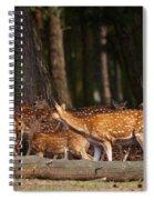 Herd Of Deer In A Dark Forest Spiral Notebook