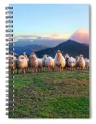 Herd Of Sheep In The Sunset Spiral Notebook
