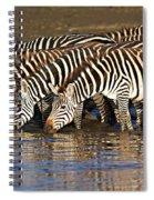 Herd Of Zebras Drinking Water Spiral Notebook