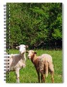 Here Is Looking At Ewe Spiral Notebook